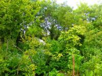 jardindabondancekerterre3_lisiere-et-kerterre.jpg