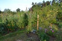 lafermelebouchot_nelson-tomates-arbres-fleurs-cie.jpg
