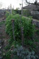 lejardinvertical_jardin-foret-002.jpg