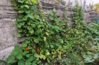 lejardinvertical_jardin-foret-004.jpg